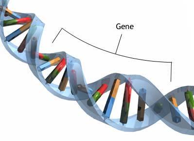 PLC-METS / IRC: Heredity and Genetics